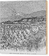 California: Vineyard, 1889 Wood Print