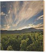 California Vineyard Sunset Wood Print by Matt Tilghman
