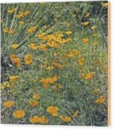Californian Poppy (eschscholzia Sp.) Wood Print by Dr Keith Wheeler