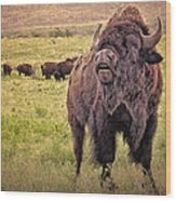 Call Of The Bison Wood Print