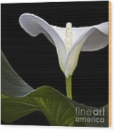 Calla Beauty Wood Print