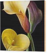 Calla Lilies Still Life Wood Print by Garry Gay