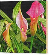 Calla Lillies Wood Print