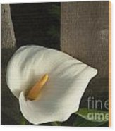 Calla Lily And Fence Wood Print