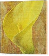 Calla Lily Beauty  Wood Print