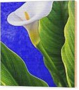 Calla Over Blue Wood Print