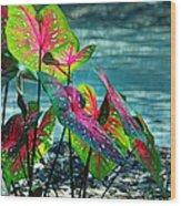 Calladiums Wood Print