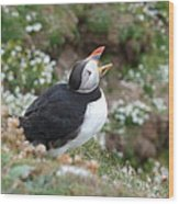 Calling Puffin Wood Print by George Leask
