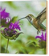 Calliope Hummingbird At Bee Balm Wood Print