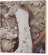 Camarasaurus Femur Covered In Burlap Wood Print
