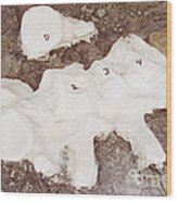 Camarasaurus Vertebrae Covered Wood Print