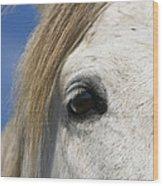 Camargue Horse Equus Caballus Eye Wood Print