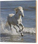 Camargue Horse Equus Caballus Running Wood Print