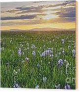 Camas Fields Wood Print