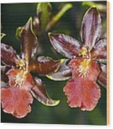 Cambria Orchid Flowers Wood Print by Dr Keith Wheeler