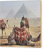 Camel And Pyramids, Caro, Egypt. Wood Print