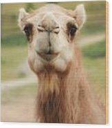 Camel Cameo Wood Print