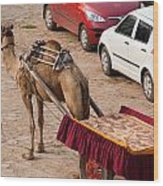 Camel Ready To Take Tourists For A Desert Safari Wood Print
