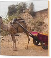 Camel Yoked To A Decorated Cart Meant For Carrying Passengers In India Wood Print
