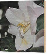 Camellia 18 Wood Print
