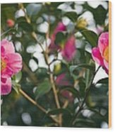 Camellia Flower (camelia Japonica) Wood Print by Dr Keith Wheeler