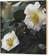 Camellia Nineteen Wood Print
