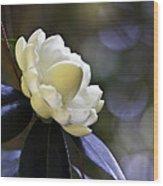 Camellia Seven Wood Print