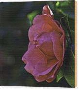 Camellia Twenty-five  Wood Print