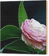 Camellia Twenty-four  Wood Print