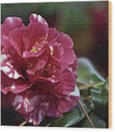 Camellia Twenty-one  Wood Print