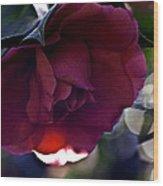 Camellia Twenty-six  Wood Print
