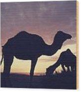 Camels At Dusk Wood Print