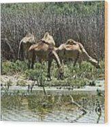 Camels At The Water Wood Print