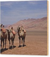 Camels On Desert With Huoyan Gobi Mountains Wood Print