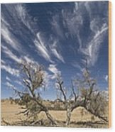Camelthorn Tree (acacia Erioloba) Wood Print
