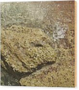 Camouflage Crabs Wood Print