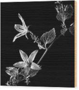 Campanula In Black And White Wood Print