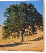 Campo Seco Tree Wood Print