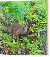 Can I Help You My Deer Wood Print