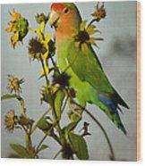 Can You Say Pretty Bird? Wood Print