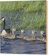Canada Geese Branta Canadensis Wood Print