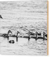 Canada Geese Family II Bw Wood Print