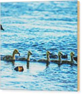 Canada Geese Family II Wood Print