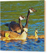 Canada Geese Family Wood Print by Paul Ge