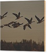 Canada Geese Fly In A Group Wood Print
