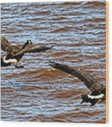Canada Geese In Flight Lake Superior Wood Print