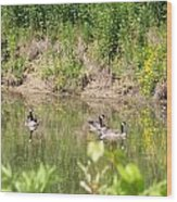 Canada Geese On Pond Wood Print