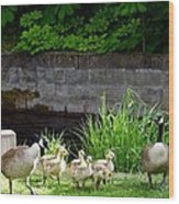 Canada Geese With Goslings Wood Print