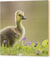 Canada Goose Baby Wood Print