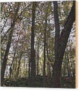 Canada Trees Wood Print